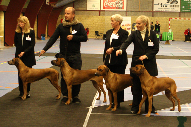 Hazinas Best Breeder's Group